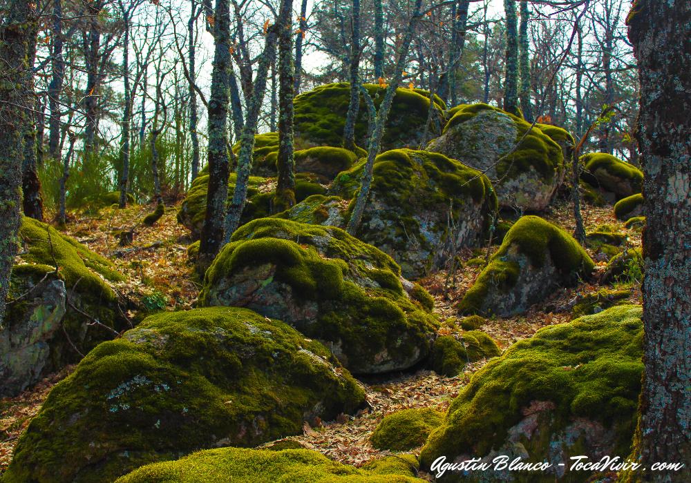 Bosque Cascada del Purgatorio. Rascafría