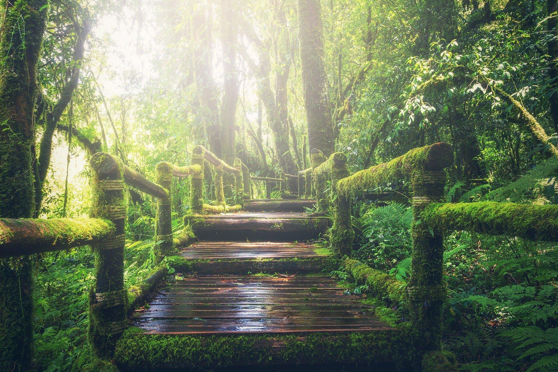 Meditación Diaria XXII: Ves donde reside la felicidad, pero no te atreves a llegar a ella.